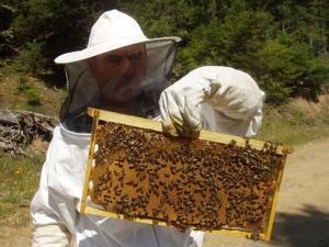Θεώρηση μελισσοκομικών βιβλιαρίων
