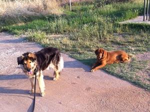 ΠΟΕΔΗΝ: Αγέλες σκύλων επιτίθενται και τραυματίζουν  προσωπικό  στο Νοσοκομείο Κιλκίς-Καμία μέριμνα, καμία φύλαξη