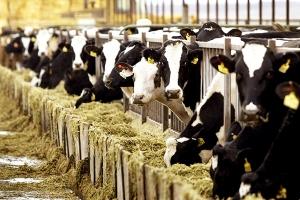 Στερνό αντίο με διανομή δωρεάν ντόπιου γάλακτος