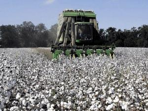 Δελτίο γεωργικών προειδοποιήσεων στη βαμβακοκαλλιέργεια της Π.Ε.Κιλκίς