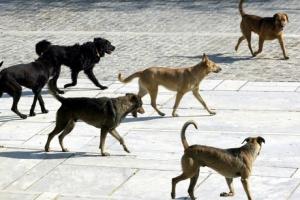 Υπέβαλε πρόταση ο Δήμος Κιλκίς για τα αδέσποτα