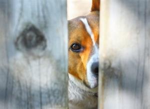 Ρωσία: Τέλος στην κακοποίηση ζώων και με το νόμο