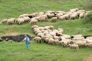 Διευκρινιστική εγκύκλιος σε θέματα διαδικασίας έκδοσης άδειας διατήρησης κτηνοτροφικών εγκαταστάσεων