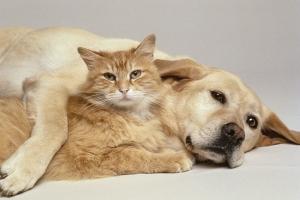 Οι Αστυνομικοί της Γειτονιάς του Κιλκίς ενημερώνουν για όσα πρέπει να γνωρίζουμε για τα ζώα συντροφιάς