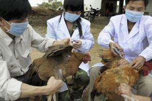 Προληπτικά μέτρα  προστασίας οικόσιτων πουλερικών από  τη γρίπη των πτηνών