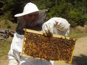 Πρόγραμμα ενίσχυσης της μελισσοκομίας